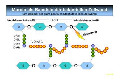 biosynthese der steroidhormone