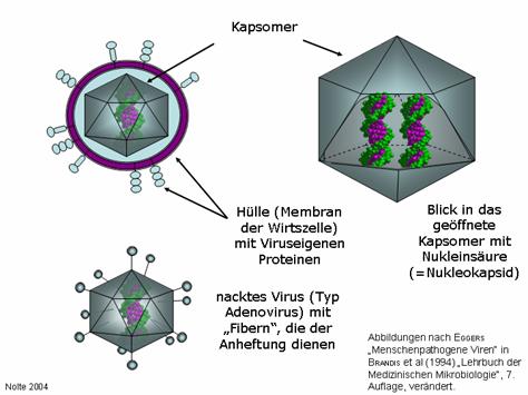 inaktivierung von viren
